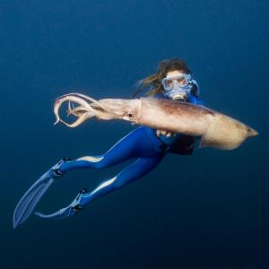 An image of a diver with a humboldt squid taken by Carrie Vonderhaar