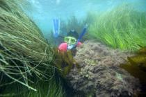 Surfgrass and snorkeler at The Ritz-Carlton Laguna Niguel