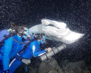 Fabien and Céline Cousteau with Manta Ray, Photo by Carrie Vonderhaar