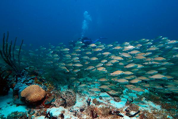 Destination Diving Meets Ecotourism | Ocean Futures Society