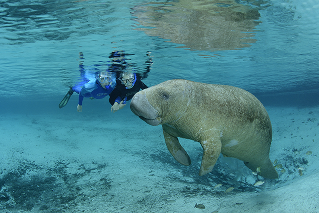Ocean Futures expedition member Holly Lohuis with her son Gavin enjoy a peaceful encounter with the West Indian manatee along the west coast of Florida.