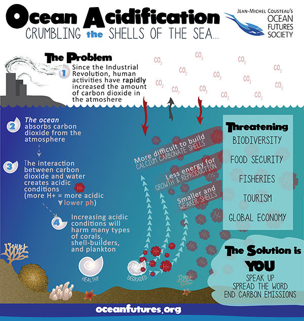 the effects of ocean acidification on various sea creatures Effects of ocean and coastal acidification on ecosystems take a moment to consider the variety of life in the sea ocean life a great home for sea creatures.