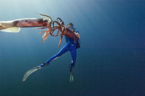 Humboldt squid alluring creatures of the deep ocean for Fishing reel ringtone