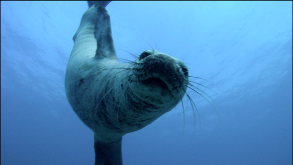 monk-seal-peeri…t-camera-uw.png